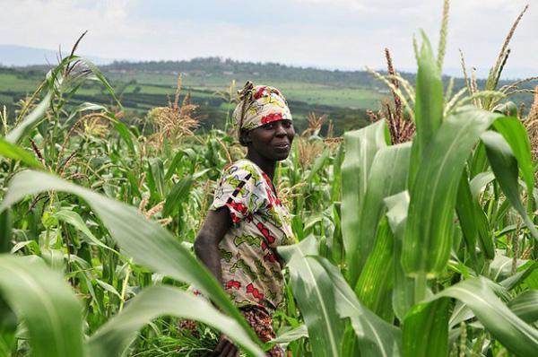 зелена револуција у пољопривреди