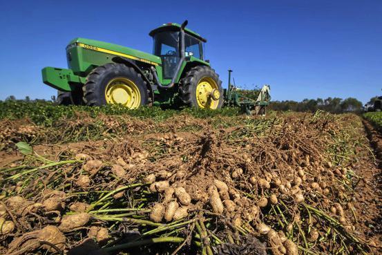 používání arašídů
