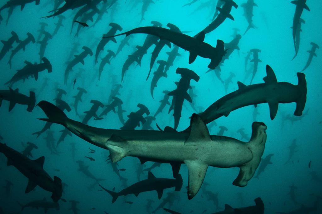 Uno stormo di squali martello