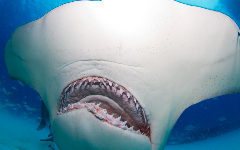 Mouth Shark Mouth