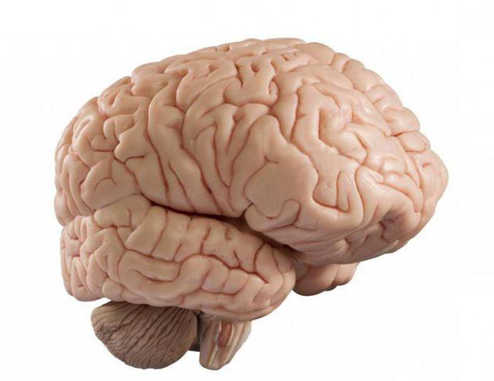 sintomi di un tumore al cervello nelle prime fasi