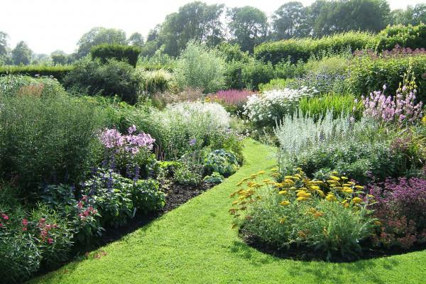 esempi di piante di erbe