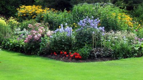 piante erbose vicino alla casa