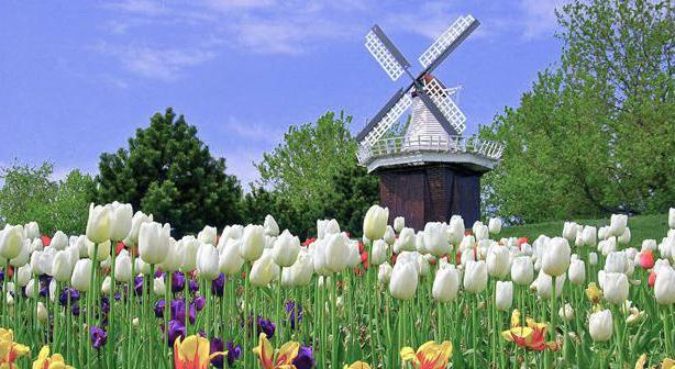 koja zemlja tulipana