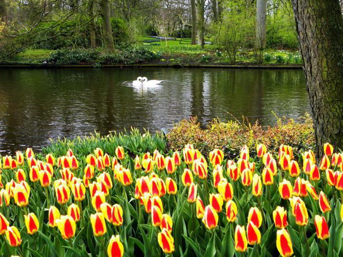 gdje je zemlja tulipana
