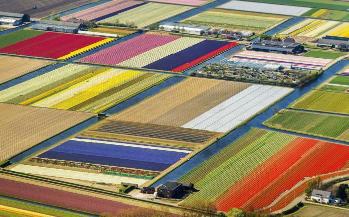 Nizozemska zemlja tulipana
