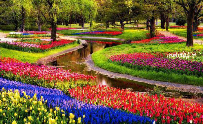 Нидерландия страна на лалета