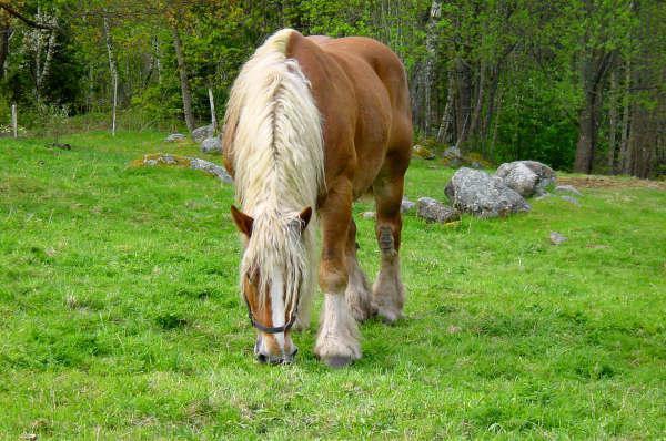 natjecanje u konjskom konju