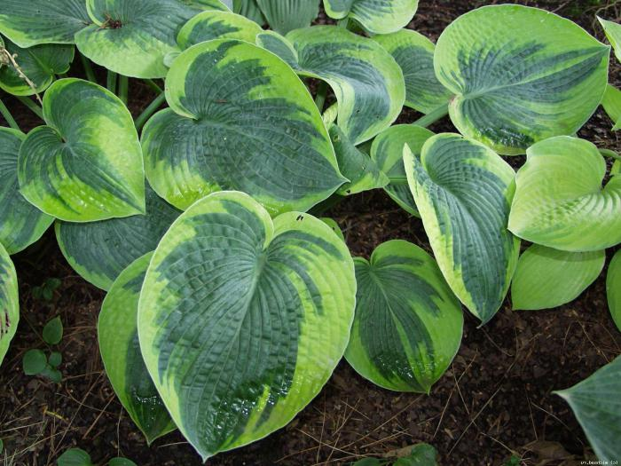 allevamento di cure per la coltivazione di piante ospiti