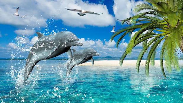 kako spi delfin