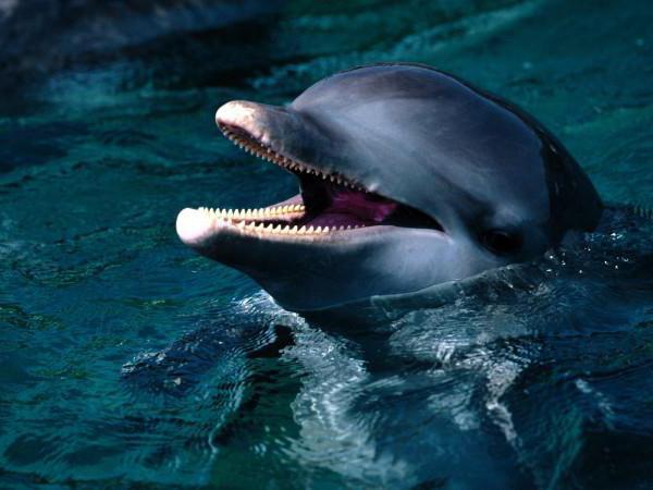 kako delfini spijo