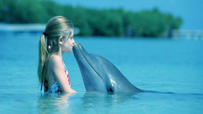 Ali delfini spijo?