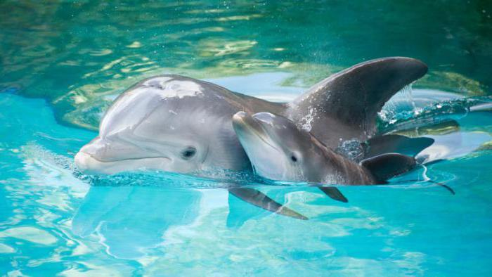 zakaj delfini spijo z enim odprtim očesom