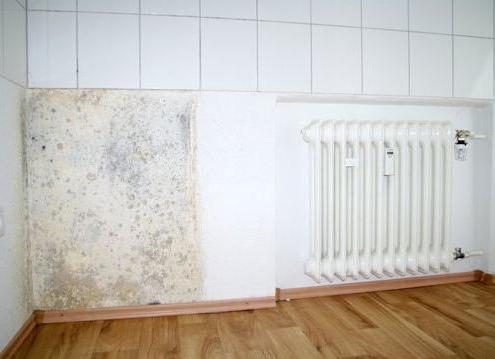 nego obraditi zid od plijesni i gljivica