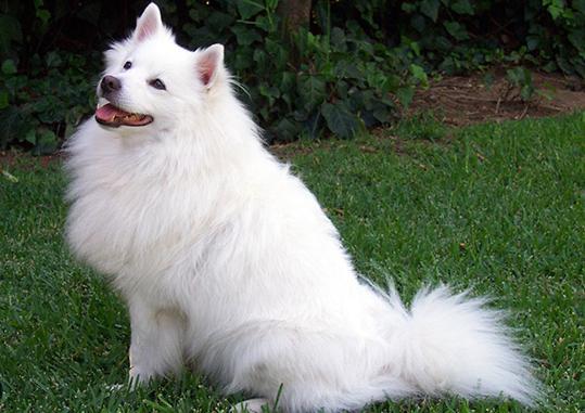 Come rimuovere le pulci nei cani