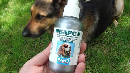 Spray pulce per cani