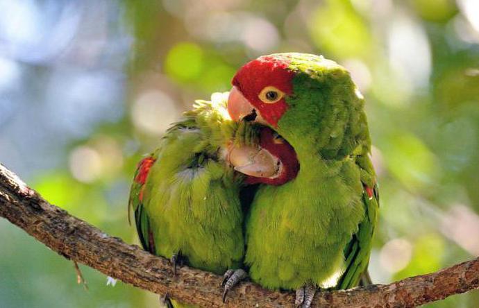 како се птице спајају са фотографијом