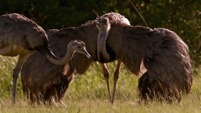како се птице паре и размножавају