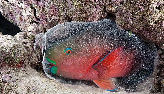 come dormire il pesce in un acquario
