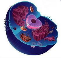biosintesi delle proteine