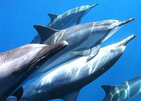 jak śpią delfiny