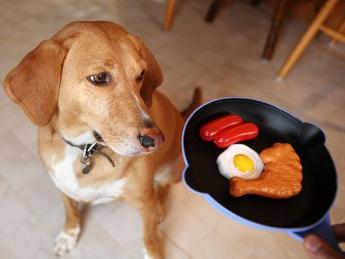 Alergia w leczeniu psów