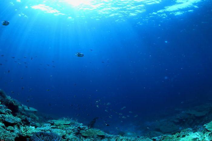 како се море на кратко разликује од мора