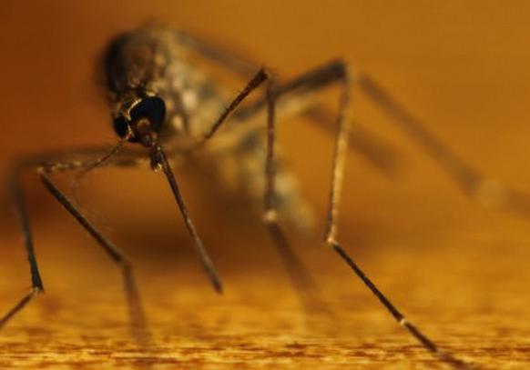 колико комараца живи