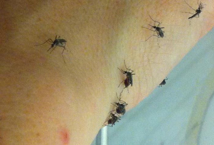 колико живи женски комарац