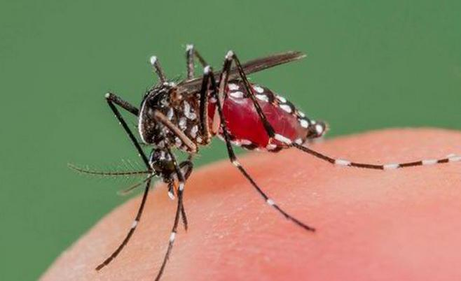 зашто комарци у природи
