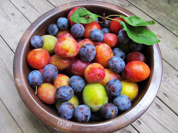kolik kalorií v červené švestce