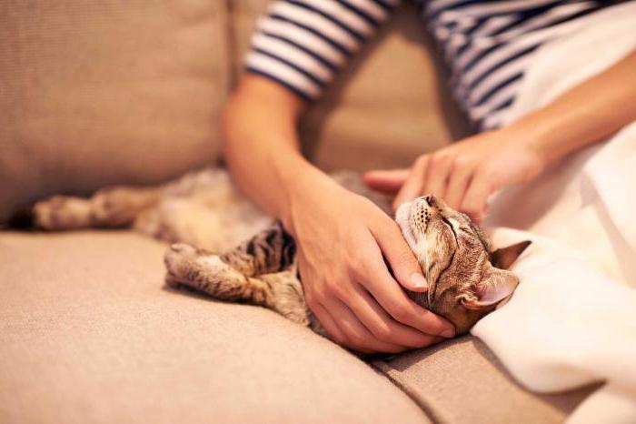 kolik je životnost kočky