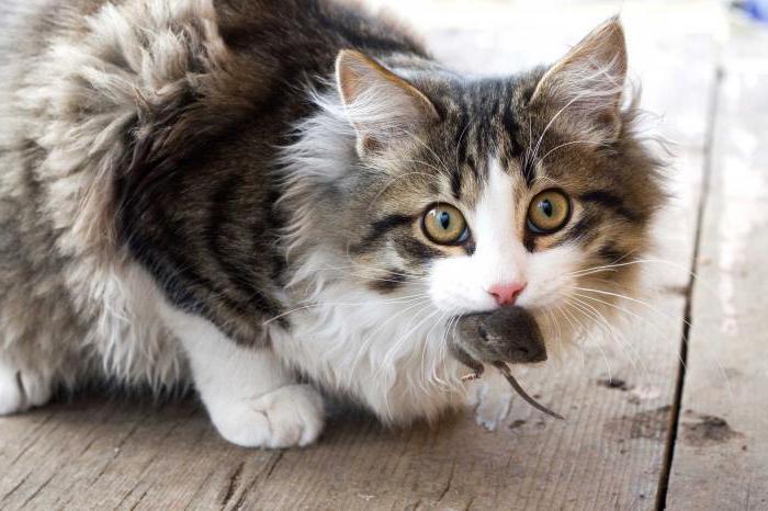 колико мачка може да живи цео живот