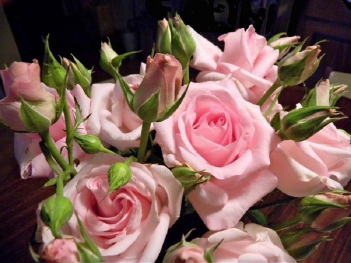 quante regalano rose a una ragazza