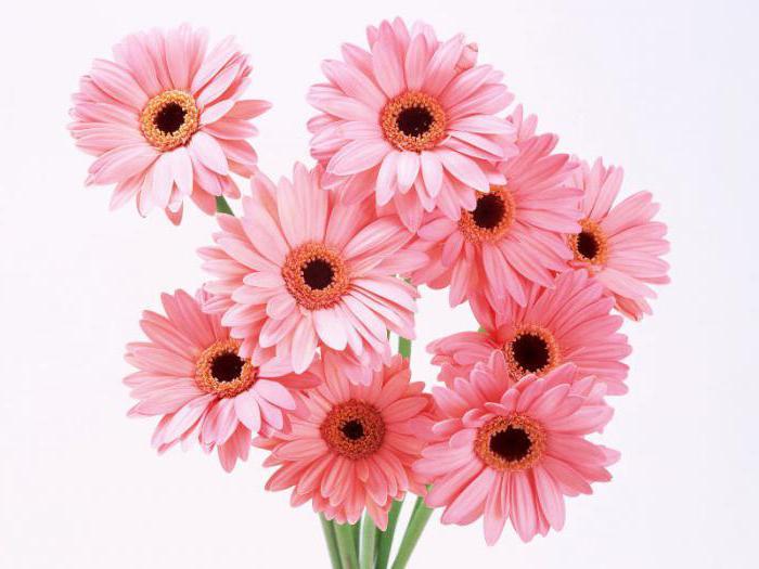 è possibile dare un numero dispari di fiori