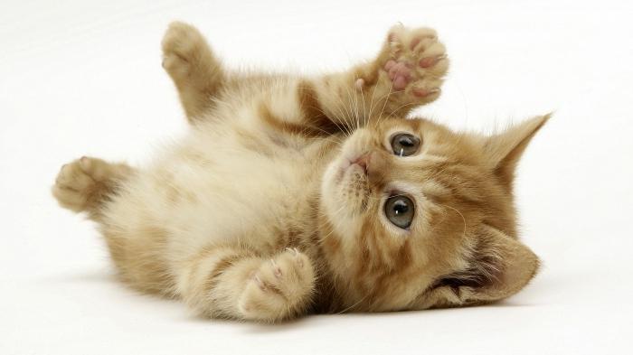 imena za mačke sfinge