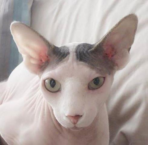 lepe vzdevke za mačke