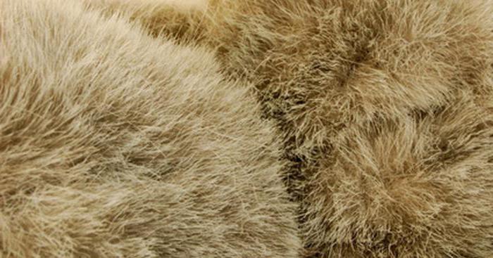 Różnice w futrze sztucznym od naturalnego