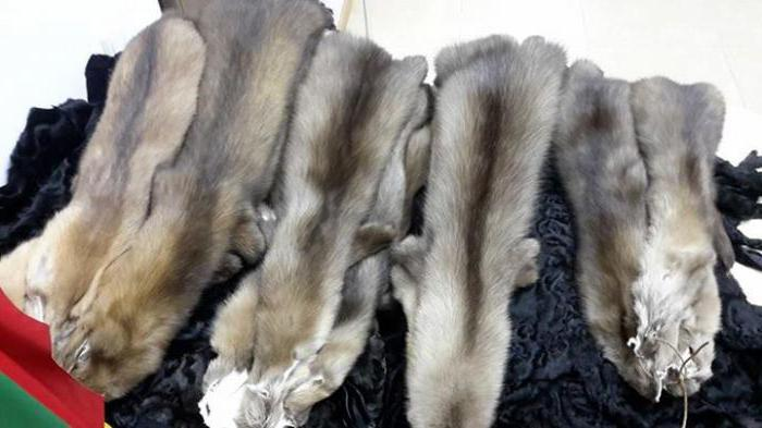 Jak odróżnić futra ze sztucznego futra z naturalnego