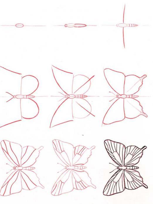 come disegnare una farfalla a matita, passo dopo passo