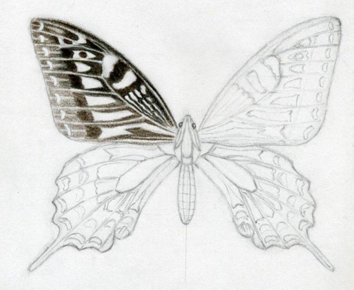 quanto è bella la farfalla