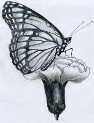 come disegnare farfalle sui fiori