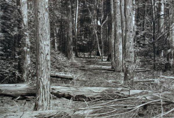 как да нарисувате гора с молив
