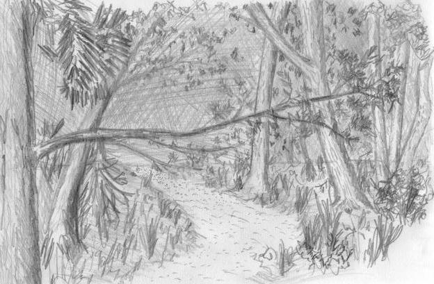 как да нарисувате гора с молив стъпка по стъпка