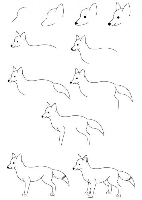 come disegnare una volpe in più fasi