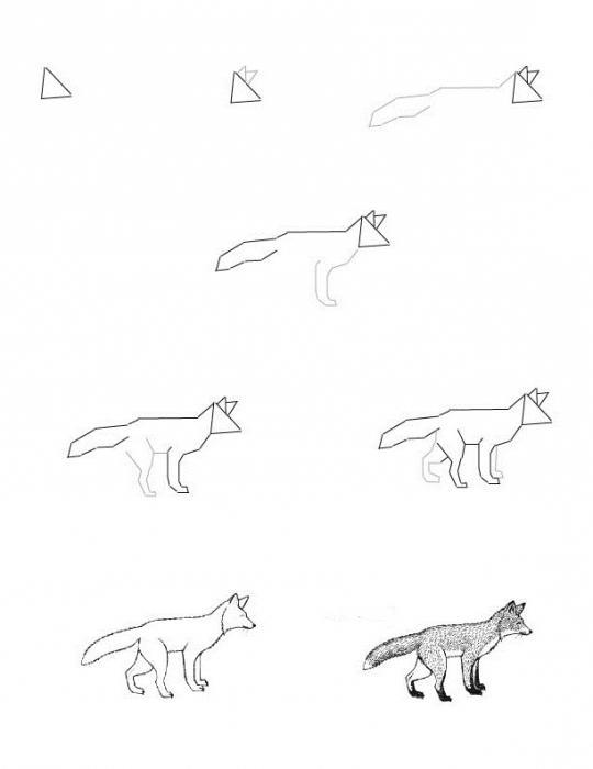 come disegnare una volpe