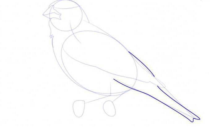 come disegnare un'allodola