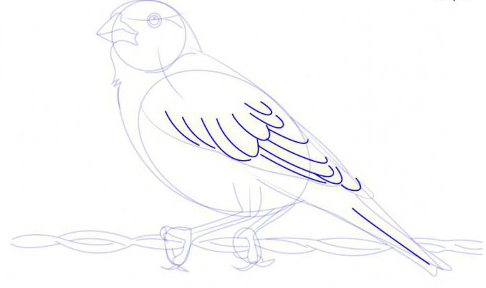disegna un'allodola a matita