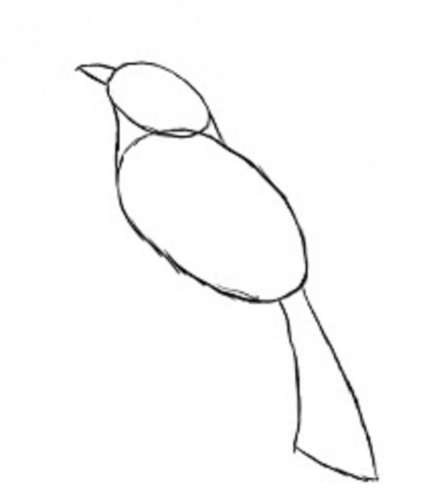 kako pripraviti ptičje perje