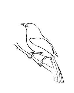 kako pripraviti ptice na roko